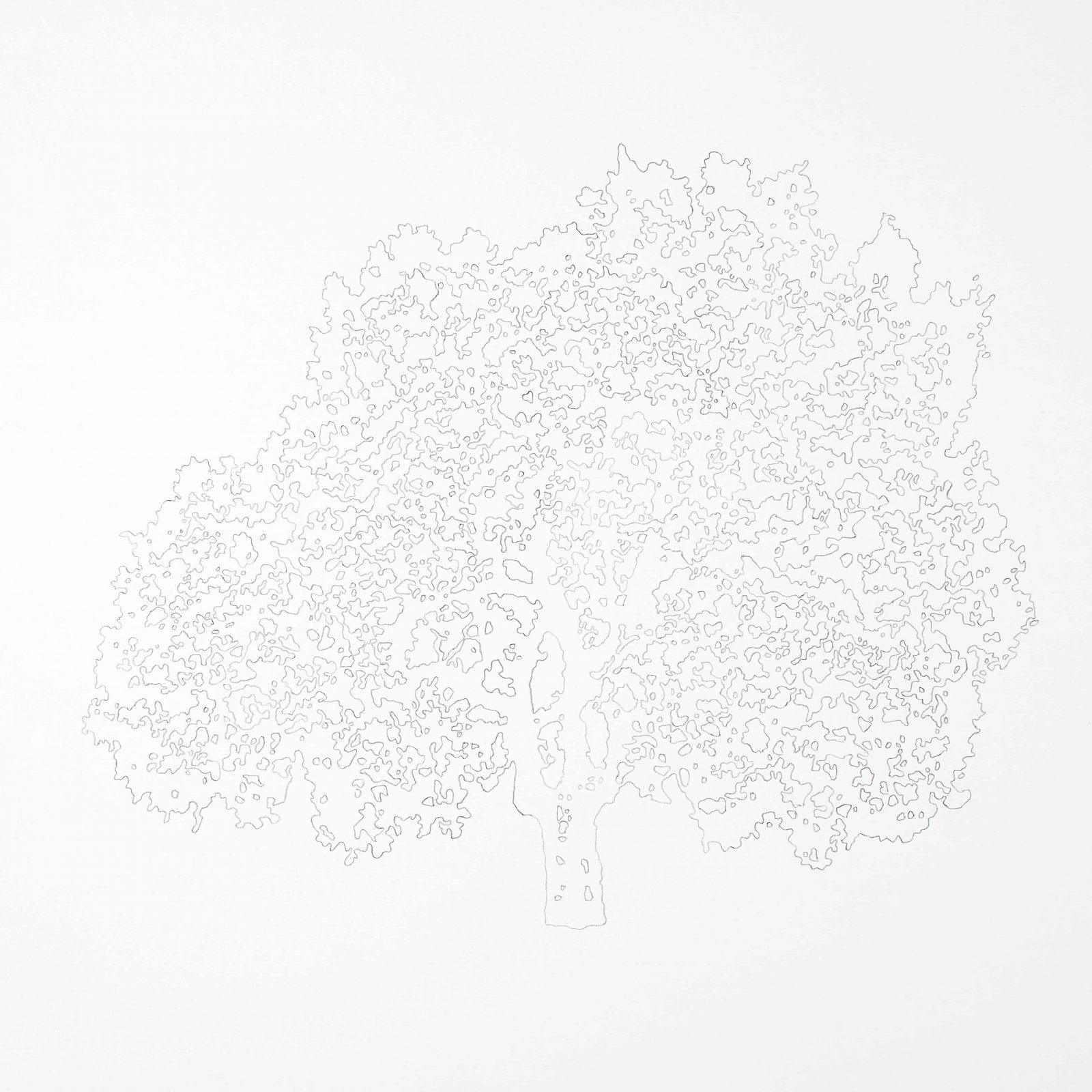 copertina La donna albero