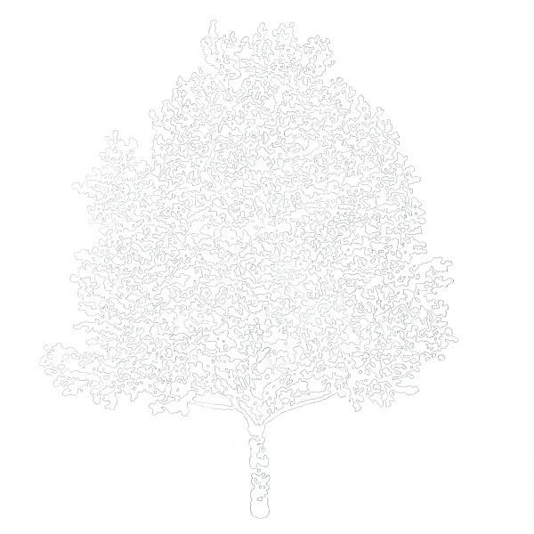 Immagine copertina La donna albero